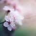 Spring 2015 by Lotfi Dakhli (TheDigitalFly)