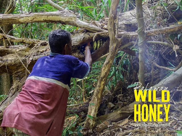 Palawan Wild Honey