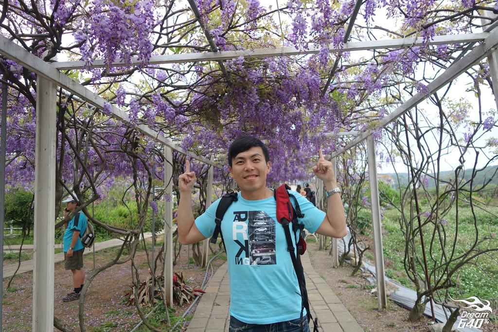 淡水紫藤咖啡園07