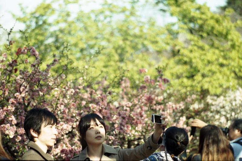 dear sakura, do you remember the days? /Shinjuku Gyoen