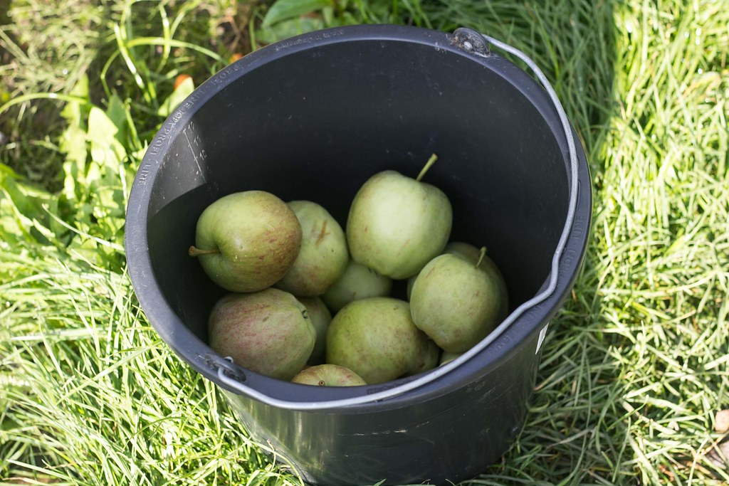 Æblemost (13)