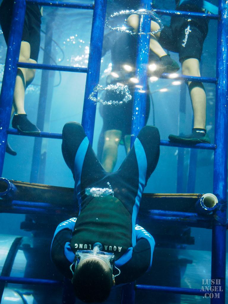 crown-regency-aquarium-tunnel