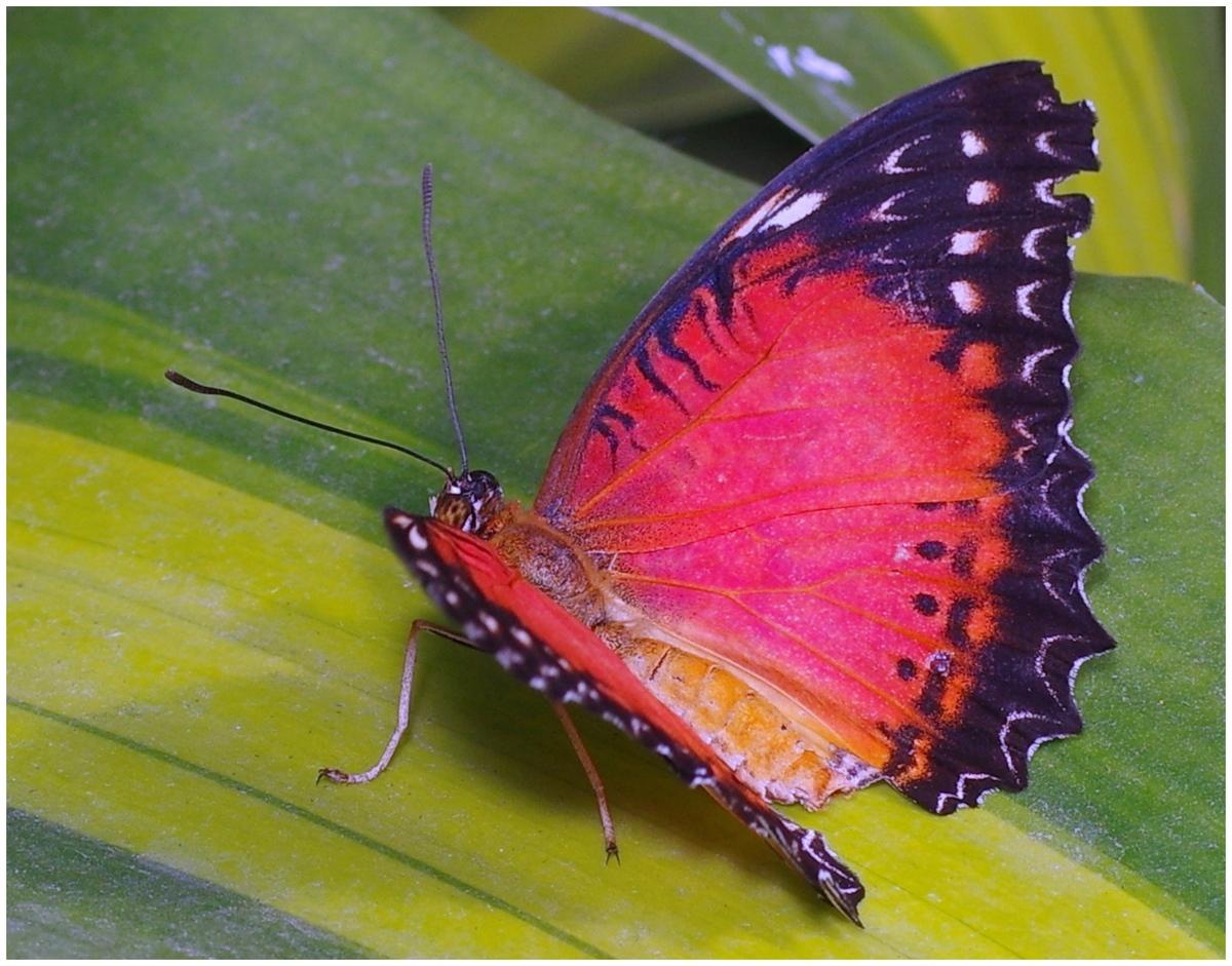 Papillons en Fêtes 2015 16823925450_06be04dbdb_o