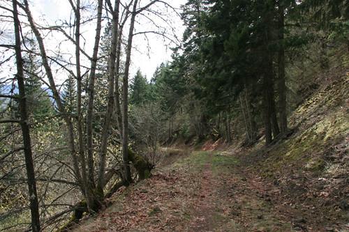 Catherine Creek Woodland