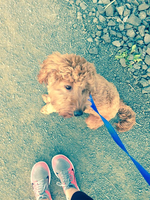 my little walking partner