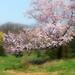 Looks like spring by Zsaj