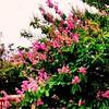 Spring Is The Air | Shah Alam | Selangor Darul Ehsan | Malaysia