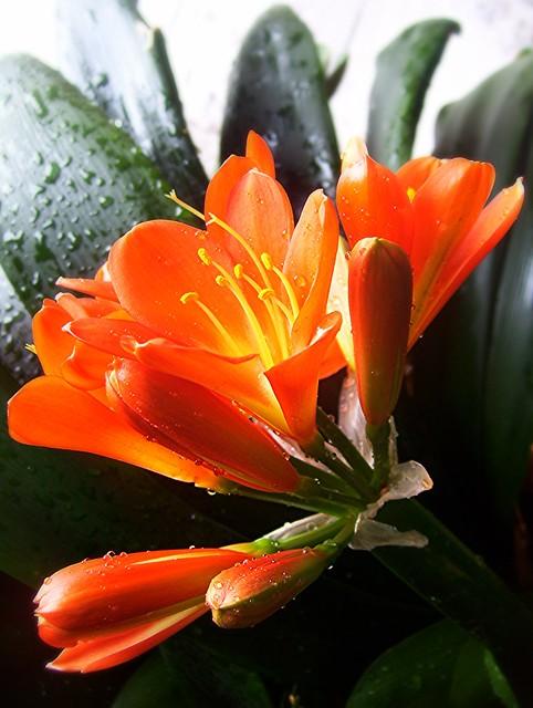 ~01-02-2006 Winter Blooms #8~