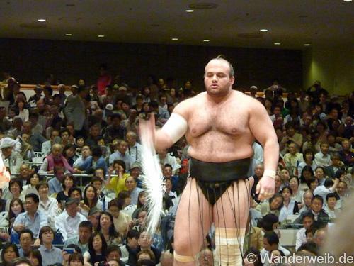 sumo (3 von 5)