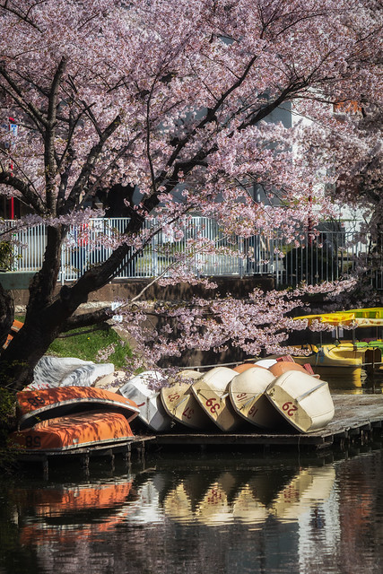 Under the Blossoms