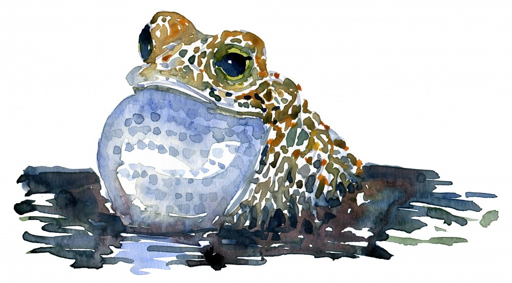 singing-frog-in-watercolor-by-frits-ahlefeldt