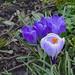 Spring 2015 blooming