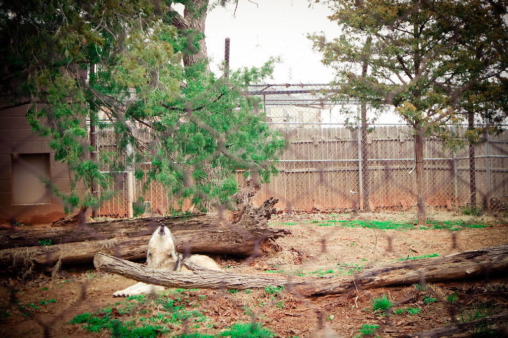 March 18, OKC Zoo