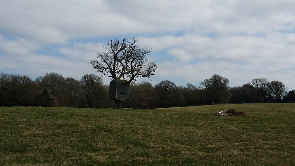 Tree house #Wealdway #sh