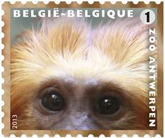 11 Zoo Timbre 8 Ouistiti-lion