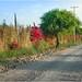 Rumbo a La Media Luna - Rioverde SLP México 140402 182410 4334 por Lucy Nieto