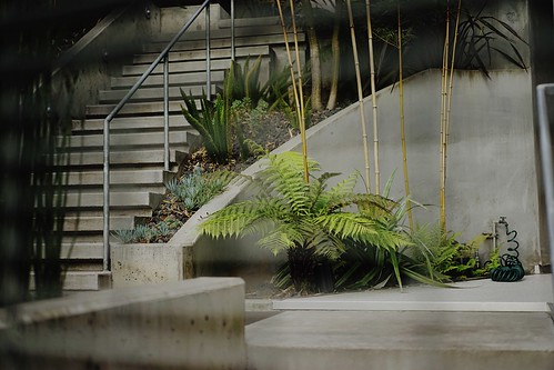 Peeking through the gate // Craig Steely Architecture // Mullen House // Bernalwood at Bernal Heights