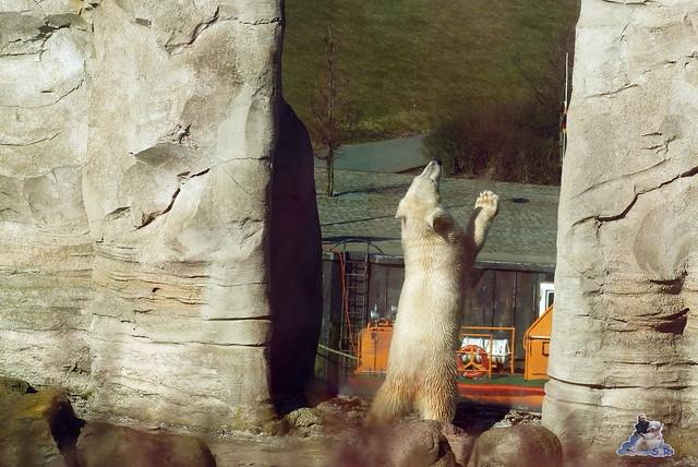 Zoo am Meer 08.03.2015  89