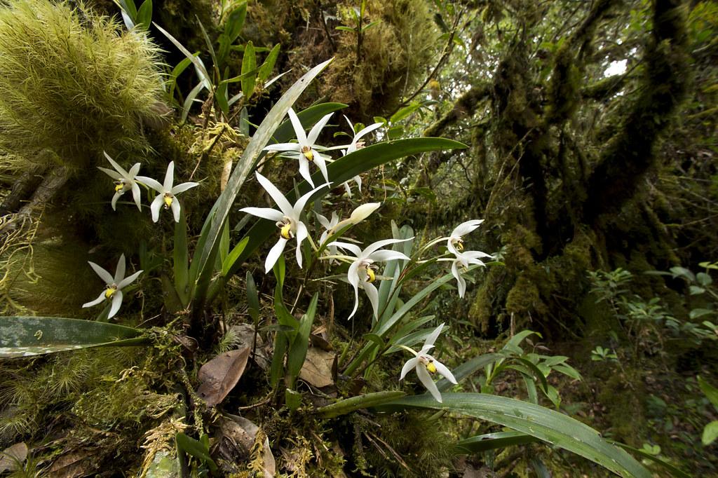 Carnivores et orchidées in situ  16808124415_e85bab4304_b