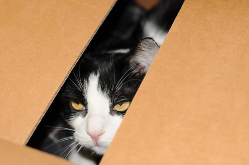 Gatto in scatola 3