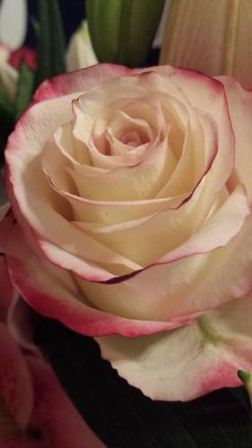 Rose. Southend. 21 Mar'15
