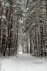 woodland, branch, winter, tree, snow, plant, rain and snow mixed, frost, forest, natural environment, winter storm, blizzard, freezing,