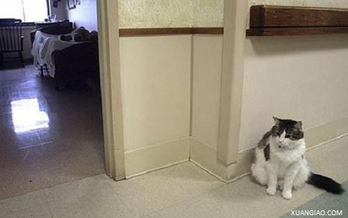 Mèo có khả năng báo trước cái chết