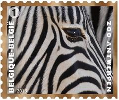11 Zoo Timbre 6 Zèbre