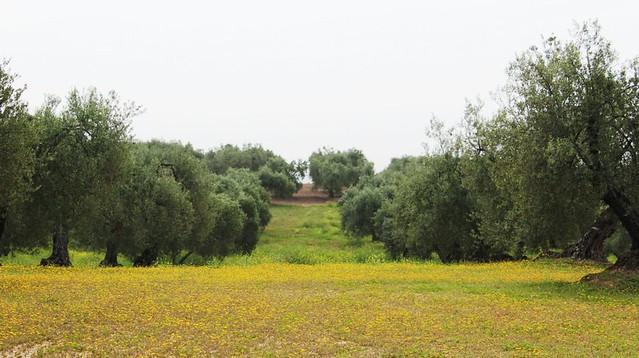 AionSur 16997192677_36f6c8fd6e_z_d La excelencia del aceite ecológico Xtra Ecolivum comienza a abrirse paso en el Pago Las Magallanas y Cerro Ovejero Medio Ambiente Xtra Ecolivum