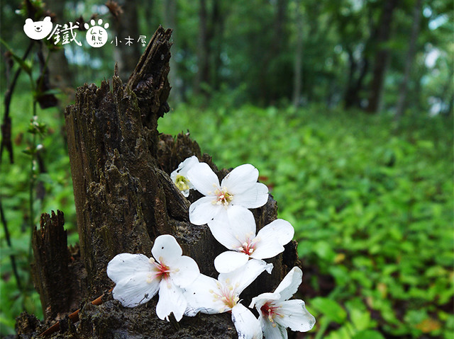 Photo:2015.4【風車轉轉的幸福】風立ちぬ By evalike