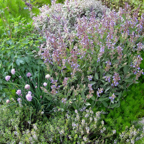 Chives, Thyme, and Sage