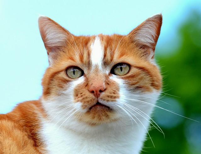 The Feline  Portrait