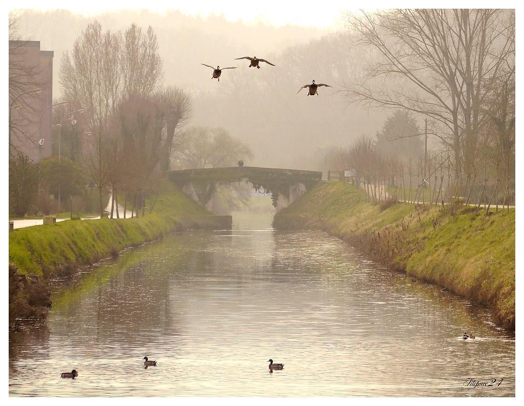 Matin de Brouillard sur le canal 16210601814_bff604f61a_b