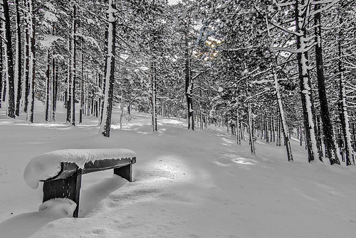 wood travel trees winter sunset bw art texture monochrome weather sunrise frozen blackwhite nikon flickr serbia nikkor lightshadow caffe artland lightroom twop srbija themagichour zlatibor artristic naturesoul