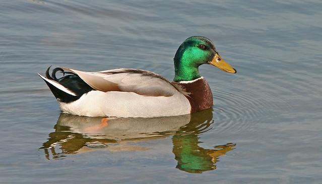 2 Duck 20d_5552