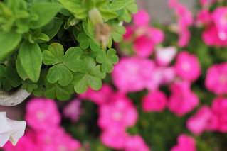 小花與小小草|嘉義 Chiayi
