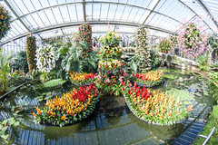 Special orchid display in the Princess of Wales Conservatory Kew