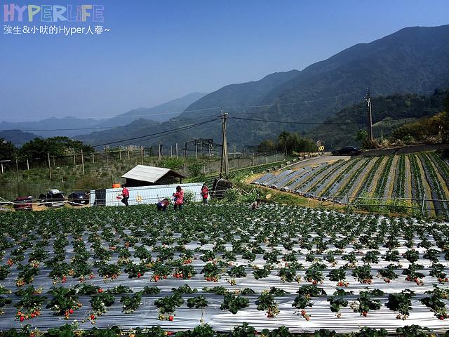 劉正男高冷草莓園  (14)