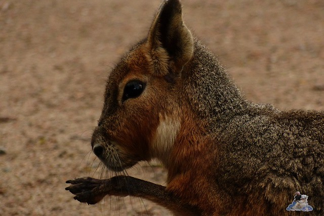 Tierpark Hagenbeck 14.03.2015  1