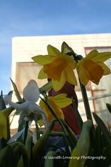 Flowers in my garden (5)
