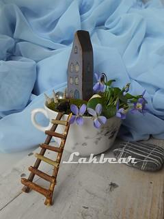 Cup of mini garden