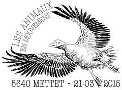 05 ANIMAUX EN MOUVEMENT Mettet