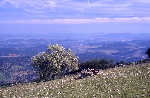 Por Santa Eufemia (vista desde el castillo)