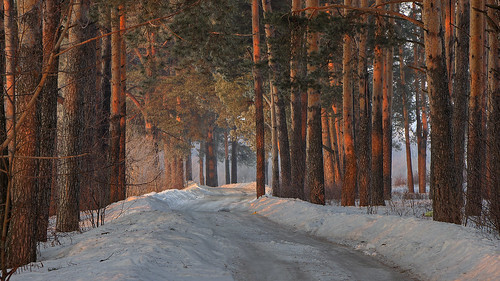 road park wood morning trees light snow cold tree primavera ice nature pine forest sunrise canon garden landscape eos march spring woods europe frost view russia path walk north perspective atmosphere natura neve trunks stroll marzo pinetrees hdr luce paesaggio nord russie утро сосны kirov 2015 russland природа россия весна лес пейзаж снег прогулка theshire 600d vyatka рассвет север март ef24105l киров вятка sergeyponomarev viatka шир сергейпономарев steppingouttheshire