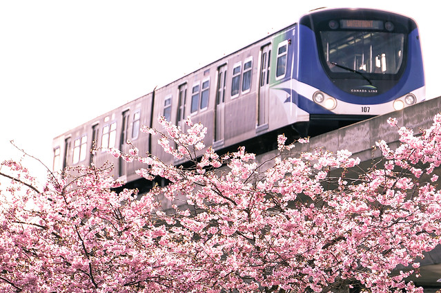 Sakura Line (Canada Line)
