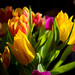 Easter blooms by Colin-47