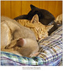 Redcats Recharging