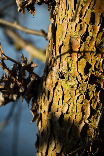 20141231-52_Tree Trunk Detail _ Bark