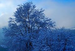 Nel bosco congelato