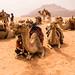 Camellos en Wadi Rum by Lou Rouge